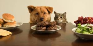 Food friending